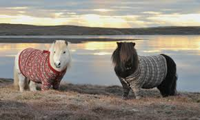 Ponies in jackets